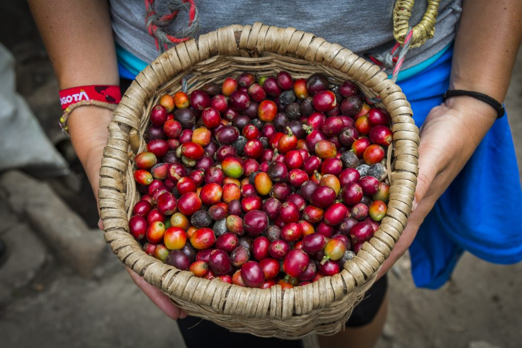 Coffee Pros and Cons - Is It Good or Bad for You?