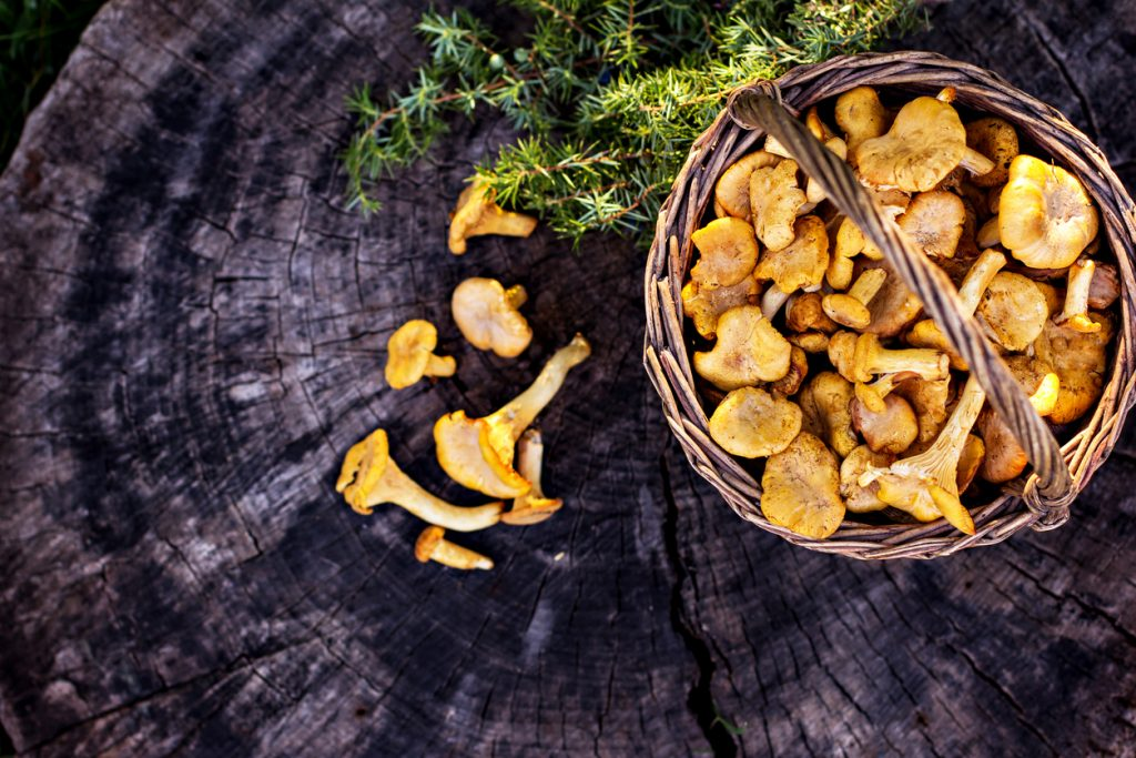 10 Mushroom Types and Their Best Uses in the Kitchen | So