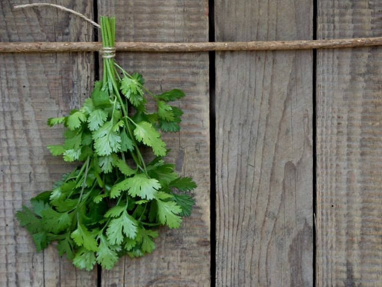 Coriander and Cilantro. Are They Two Different Things?