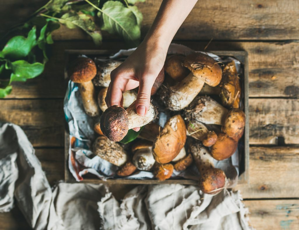 Mushroom Types and Their Best Uses